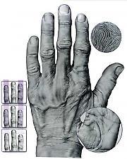 Шта руке говоре о људима?