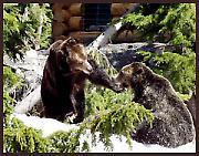 Човек је човеку… медвед