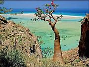 Невероватни архипелаг Сокотра